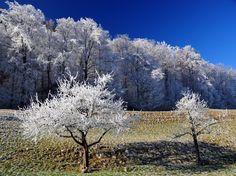 Original Nature Photography by Andreas Ender Digital Photography, Nature Photography, Buy Art, Paper Art, Saatchi Art, Original Art, Nature Tree, Fine Art, Landscape