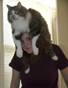 this used to be me when marcus was alive.  he'd perch on my shoulder while i was cooking.  he didn't quite understand that, at 26 pounds, this arrangement would not last long ...