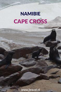 Tijdens mijn rondreis door Namibië bezocht ik de vele zeehonden bij Cape Cross. Hier lees je de informatie over Cape Cross. Lees je mee? #capecross #zeehonden #namibie #jtravel #jtravelblog