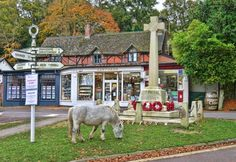Burley, New Forest, England