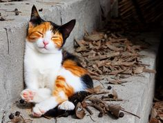 """""""There are few things more heartwarming than to be welcomed by a cat."""" --Tay Hohoff"""
