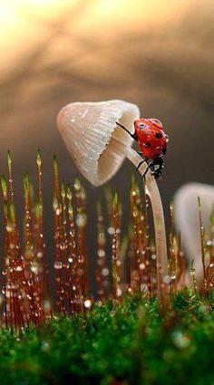 雨にぬれてびっしょびっしょ。 てんとう虫といえども、 風邪を引くといけないから、 雨宿りをしていこう。 先をいそいでも、しょうがないからね。