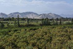 Harvest Market, Fair Trade Chocolate, Farmer, Vineyard, Backdrops, Mountains, Landscape, Peru, Outdoor