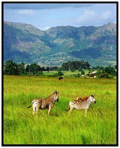 Mlilwane Wildlife Sanctuary, Kingdom of Swaziland, Southern Africa [photo by Simon Purdy, Perth, Australia]....