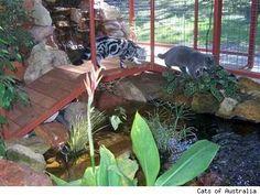 Outdoor Cat Apartment