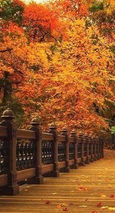 ♥Shades of Autumn beautiful amazing