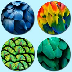 Not so much as Birds of a Feather, but birds feather. Colourful and vibrant birds feather printed onto round beer mats. Real pulpwood beermats, which have been litho-printed. Thickness is 1200 microns. Beer Mats, Litho Print, Feather Print, Bird Feathers, Dog Cat, Vibrant, Birds, Printed, Nature