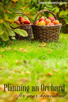 planning an orchard for your homestead