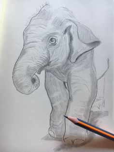 Pencil Drawings Of Animals, Animal Sketches, Art Sketches, Little Elephant, Elephant Art, Planet Tattoos, Preschool Games, Pyrography, Light In The Dark