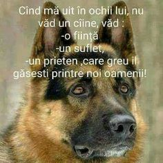Science And Nature, True Words, Animals And Pets, Animal Pictures, Thoughts, Funny, Dogs, Cute, Pets