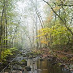 Stream in Swedish Beech Forest I - Wall Mural