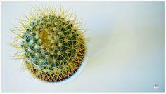 Tu Cajón Vintage: Macro del día: Cactus