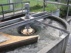Gravitation water vortex power plant