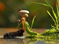 Com a sua máquina, Vyacheslav Mishchenko fotografa até os cogumelos mais comuns, mas de ângulos que lhes confere uma espécie de magia.