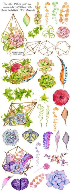 Watercolor Succulents and cactus terrariums. Cactus clipart. Hand painted clipart, succulents clip art. Item details: 38PNG files (300 dpi, RGB, transparent background) size (wide side) aprox.: 1800-2400 px