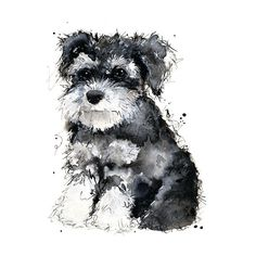 I could have pinned this one numerous times, lol love it!  Miniature Schnauzer - 8 x 10 inch print  of original artwork - Dog - Puppy