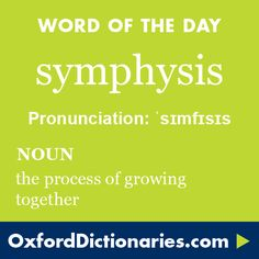 symphysis (noun): The process of growing together. Word of the Day for 22 May From the Greek word sumphusis. Meaning growth and together. Fancy Words, Big Words, Words To Use, Greek Words, Pretty Words, Cool Words, Unusual Words, Rare Words, Unique Words