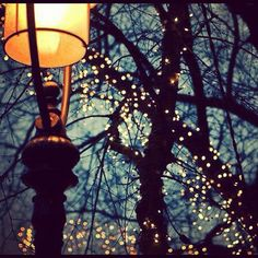 christmas lights images, image search, & inspiration to browse every day. Street Lamp, Pretty Lights, Tumblr Wallpaper, Twinkle Lights, City Lights, Night Lights, Street Lights, Fairy Lights In Trees, Belle Photo