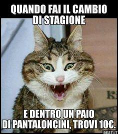 Quando cambi s – Funny Animal Memes, Funny Animal Pictures, Cat Memes, Funny Photos, Funny Cats, Funny Animals, Verona, Funny Times, Funny Video Memes