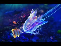 💖Relaxing Music Stress Relief💖 Beautiful Relaxing Music #calmmusic - YouTube Underwater Animals, Underwater Life, Colorful Fish, Tropical Fish, Blue Jellyfish, Jellyfish Species, Watercolor Jellyfish, Watercolor Fish, Deep Sea Creatures