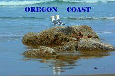A coffee mug featuring seagulls at the Oregon Coast - Neskowin, OR Oregon Coast, Travel Bugs, Coffee Mugs, Outdoors, Nature, Photography, Image, Naturaleza, Photograph