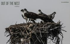 Out of the Nest