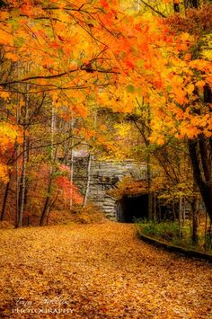 and in the eternal youth of Nature you may renew your own. Fall Pictures, Fall Photos, Nature Photos, Autumn Scenes, Autumn Aesthetic, Autumn Nature, Seasons Of The Year, Belle Photo, Beautiful Landscapes