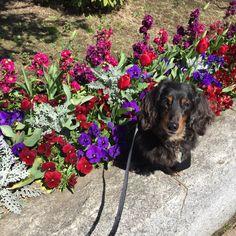 赤い花づくし 品川中央公園