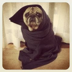 I do this with my puggy, too. :)