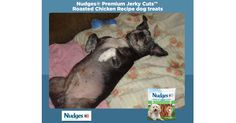 Dailybreak: Bite-Sized Contests About Stuff You Love My furkid(here) Speigel, loves his Nudges!  A nap after a snack!