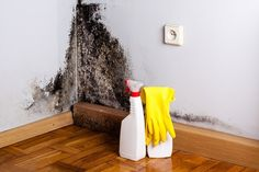 It's important to look to your environment for potential causes, including the presence of toxic black mold. To be clear, black mold. Kill Black Mold, Toxic Black Mold, Remove Black Mold, Toxic Mold, Remove Mold Stains, Mold And Mildew, Cavity Wall Insulation, Mold Exposure, Cold Or Allergies