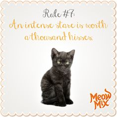 Rule #7: An intense stare is worth a thousand hisses.