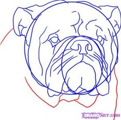 How to draw an english bulldog...love guides like these