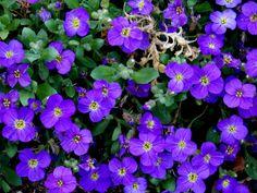 Eco Garden, Dream Garden, Garden Plants, House Plants, Garden Ideas, Purple Flowers, Spring Flowers, Alone Photography, All About Plants