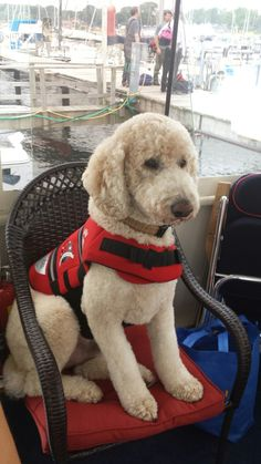 Bosley is ready for a boat ride