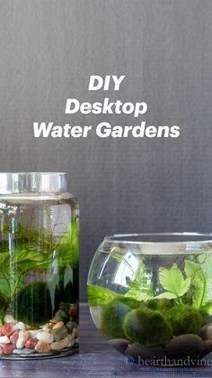 Plants For Terrariums, Garden Plants, Water Terrarium, Diy Terrarium, House Plants Decor, Plant Decor, Water Plants Indoor, Container Gardening, Indoor Gardening