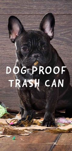 49 Best Dog Proof Trash Cans - Animal Proof Garbage Cans images in