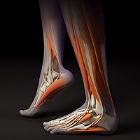 Build Stronger Feet and Ankles