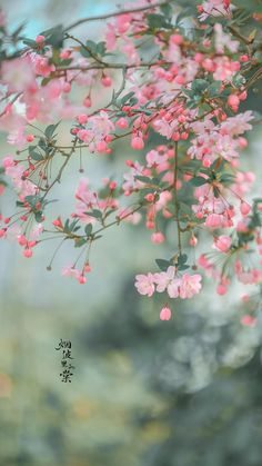Beautiful Flowers Pictures, Beautiful Flowers Wallpapers, Beautiful Rose Flowers, Beautiful Nature Wallpaper, Pretty Wallpapers, Flower Pictures, Wallpaper Nature Flowers, Flower Background Wallpaper, Scenery Wallpaper