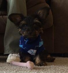 My little Tobby