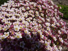 Ogród zmyślony - strona 3 - Forum ogrodnicze - Ogrodowisko