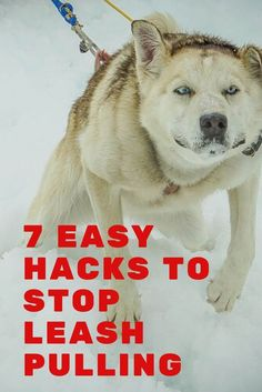 7 Easy Hacks to Stop Leash Pulling by Your Dog. Learn how to enjoy walking your dog again with these #dogtraining tips. #GoodDoggies #leashpulling