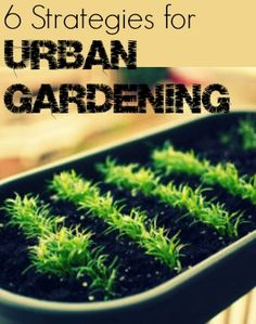 Turn your urban jungle into a farm paradise with these 6 strategies for city gardening