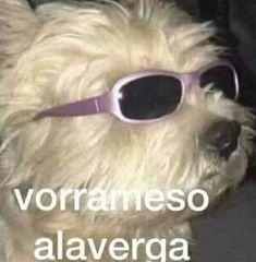 Cute Memes, Dankest Memes, Funny Memes, Funny Spanish Memes, Spanish Humor, Mundo Meme, Reaction Pictures, Funny Pictures, Snapchat Stickers