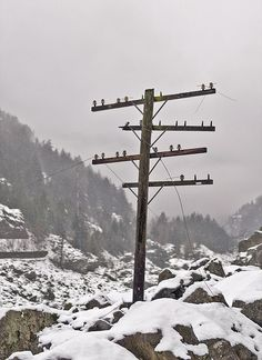 Dying Telegraph Pole