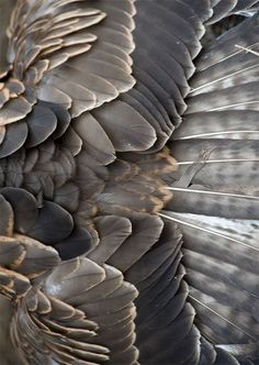 // Gold and grey feathers