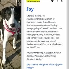 Let's see what the urban dictionary say for JOY. This is a #urbandictionarychallenge that I accepted. Many Thanks to my lovely furfriend @crazybelladog for tagging me to play this #challenge. You can play too if you want. 🐾🐾🐶 Follow JOY at her Facebook page for many more photos and videos:  https://www.facebook.com/JOYMixedBreedGirl/  #dog #instagramdogs #ilovemydog #instapuppy #dogfamily #doggie #ilovemypet #dogofinstagram #happydog #dogface #dogsofig #dogselfie #doglovers…