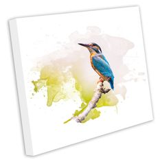 Kingfisher animal canvas print framed photo picture wall artwork bird anim269 #Unbranded #Modern