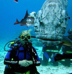 Cod Hole, Far North Barrier Reef.