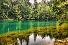 jeziorka, Skarabeusz, wikipedia